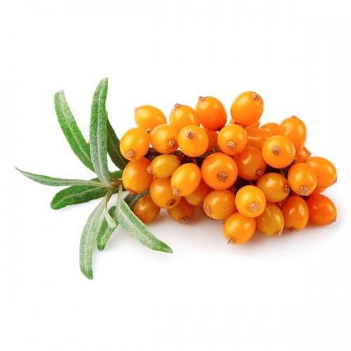 frutto-di-olivello-spinoso