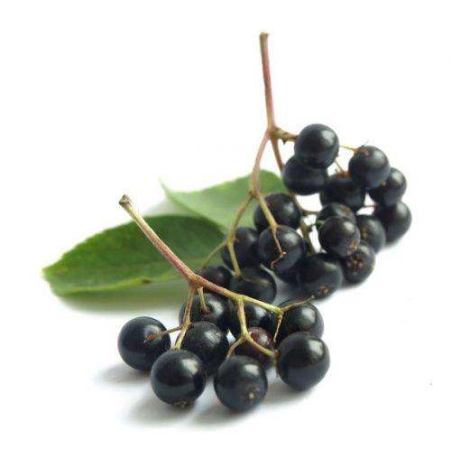 frutto-di-sambuco